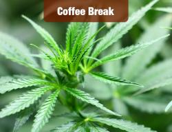 Cannabis Gets a Trade Show