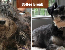 America's Top 10 Shelter Dog Makeovers